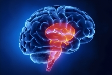 Brain Stem Injuries