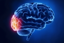 Occipital Lobe Brain Injuries